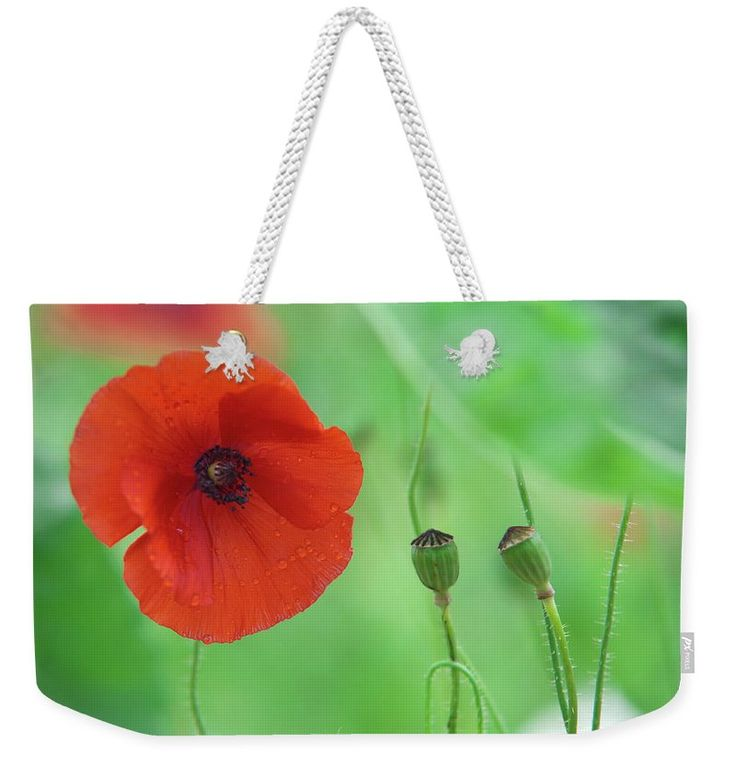 """Red And Green Weekender Tote Bag (24"""" x 16"""") by Jenny Rainbow.  The tote bag is machine washable and includes cotton rope handle for easy carrying on your shoulder.  All totes are available for worldwide shipping and include a money-back guarantee."""