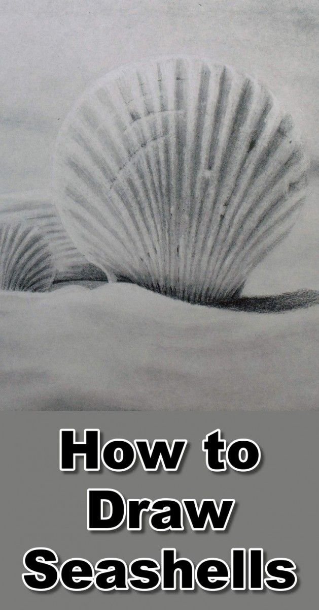 Learn how to draw seashells and shells in this pencil drawing tutorial at online art lessons