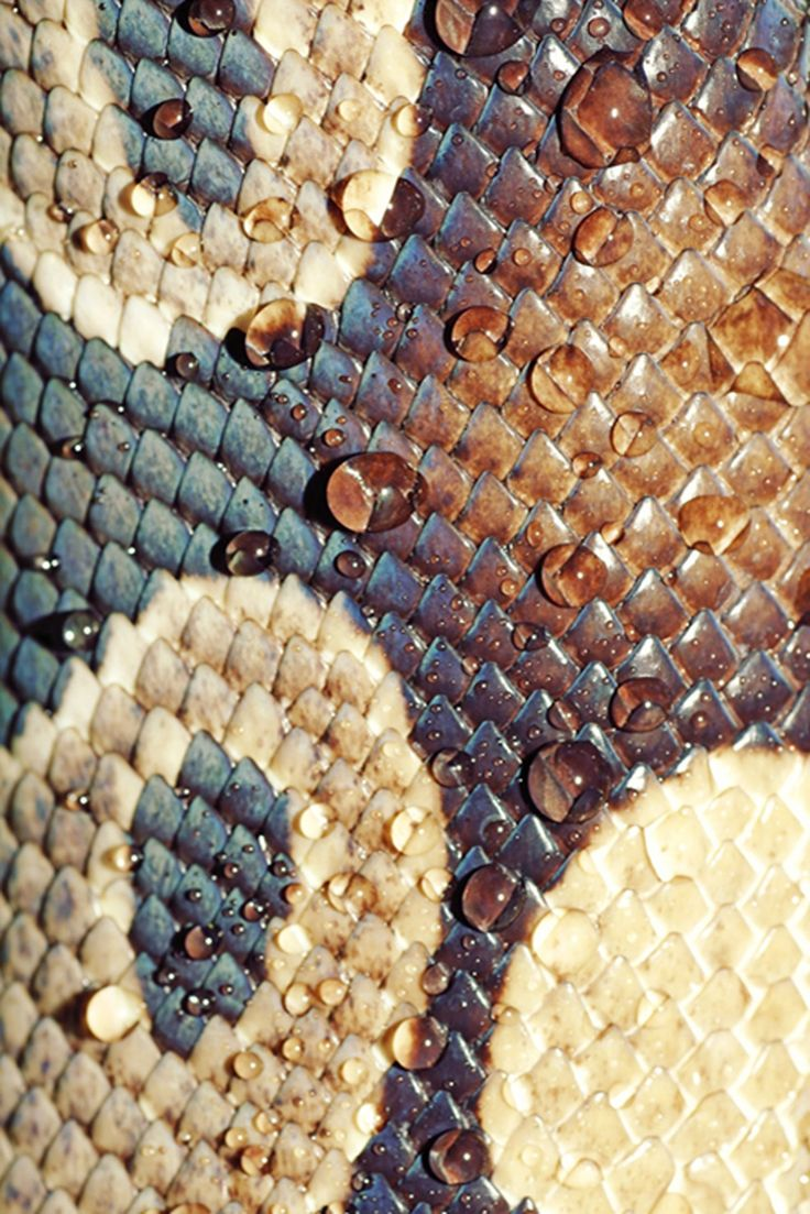 I love reptile skin... but not in an animal cruelty way