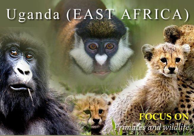 Tours Of -Safari Park- Kenya -Great Rift Valley-Uganda | sheronfenty