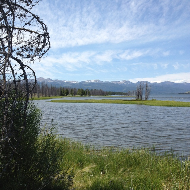 29 best images about fishing west yellowstone for Hebgen lake fishing report