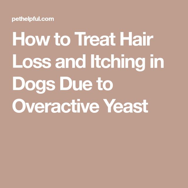How to Treat Hair Loss and Itching in Dogs Due to Overactive Yeast