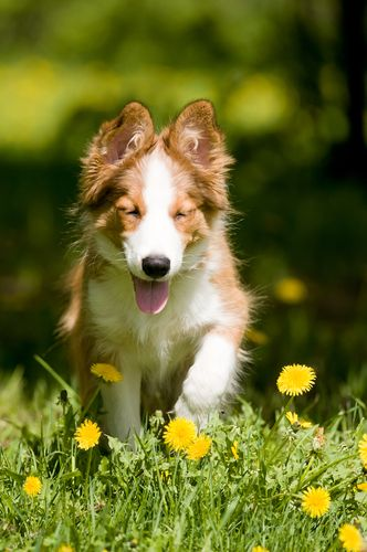 How To Have a Happier Dog