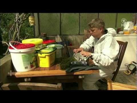 Moos im Garten natürlich entfernen statt giftiger Eisendünger | Schweiz Tipps