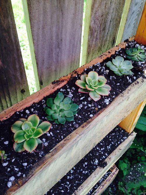 Pallet garden succulents!