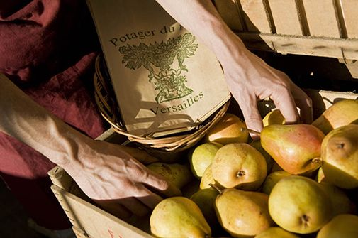 Pears from the Potager du Roi, the best kept secret in Versailles!