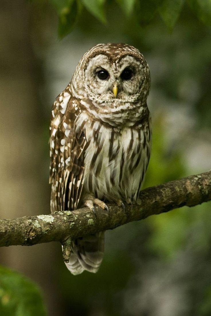 Baby Girl Owl Wallpaper Best 25 Owl Wallpaper Iphone Ideas On Pinterest Owl Art