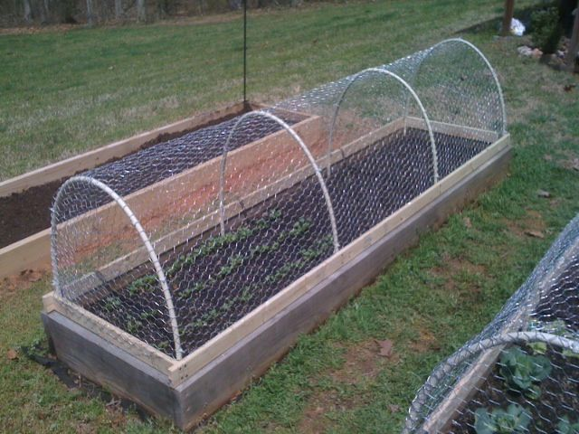 "Raccoon and squirrel proof cages for our veggie garden. PVC pipe is screwed into boards with 6"" over that anchors the cage into the ground. Cannot be pushed off by critters, yet lifts straight off for humans."