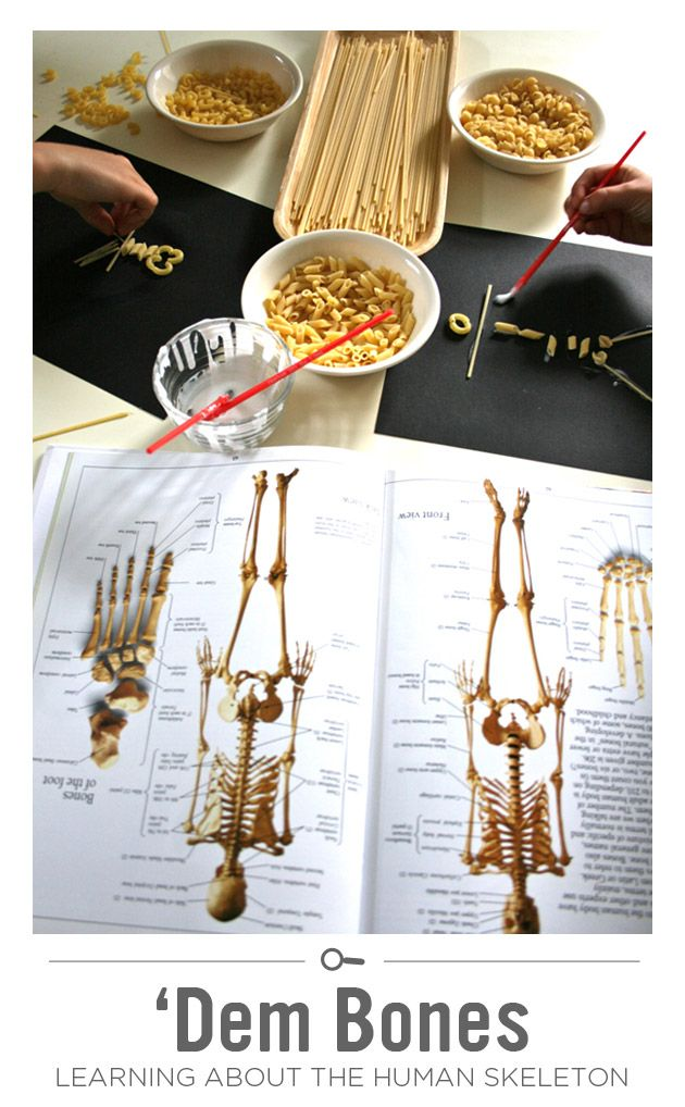 Human skeleton anatomy games to learn