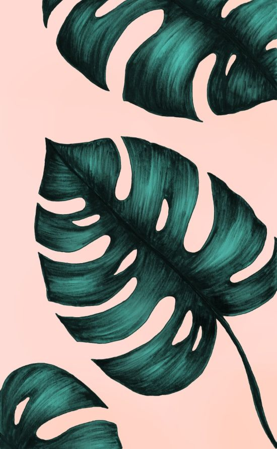 Philodendron Art Print, Monstera Art Print, Monstera deliciosa trend, Monstera…