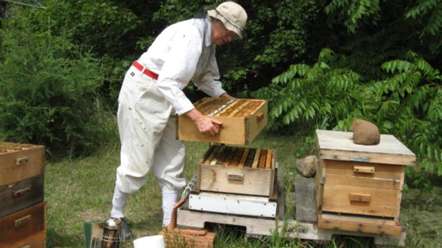 Jeanne Hansen will teach Madisonians the art of backyard beekeeping through her annual classes, starting in January and running through May.
