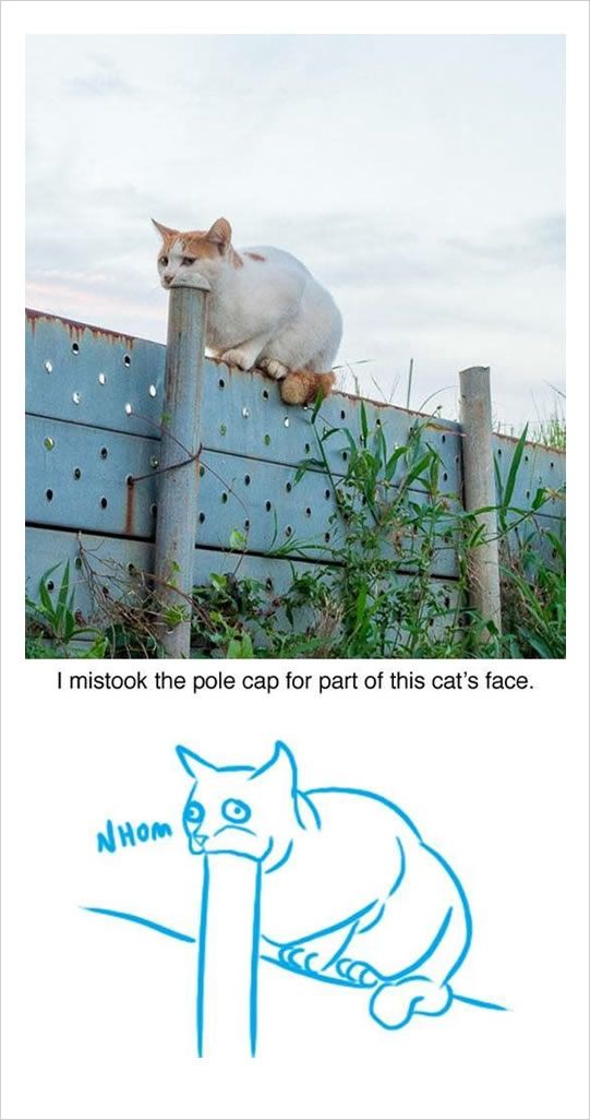 funny cat pictures: pole cap for part of cat's face