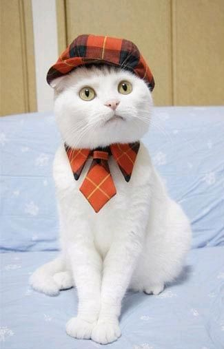 Google Image Result for http://news-cdn.stylecaster.com/wp-content/blogs.dir/2/files/stylish-cats/cat-in-hat-001-1312928553.jpg (cat,cute cat,hat,tie,white cat)