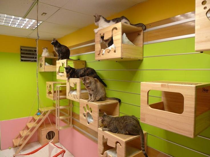 скачать игру cat hotel бесплатно