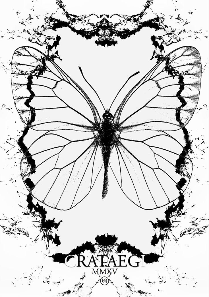Billede af Sommerfugl plakat - Alcides Dwyn