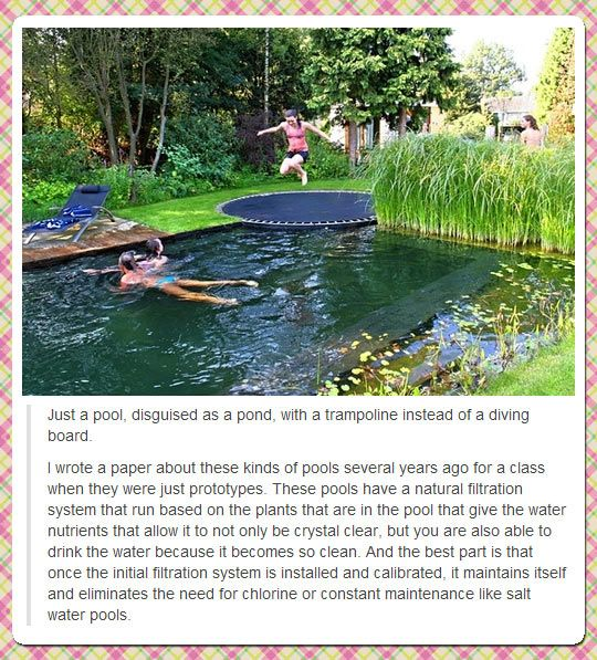 A pool, disguised as a pond.