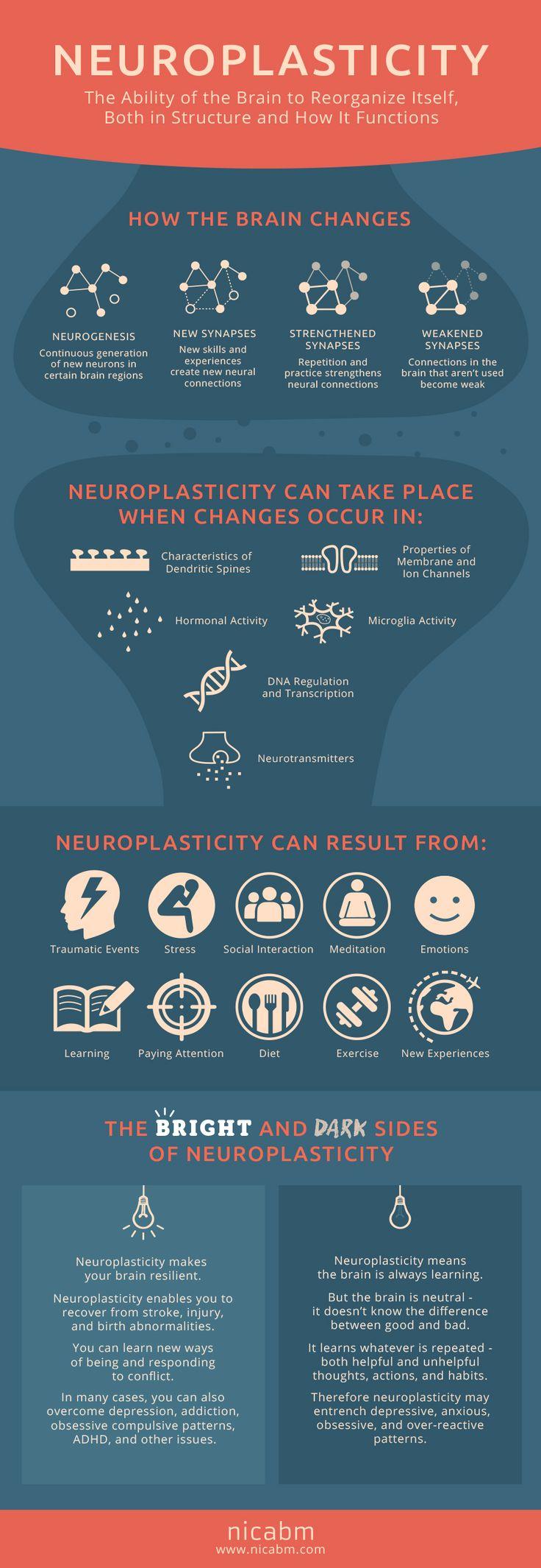 ¿Cómo funciona la neuroplasticidad?  [Infografía]