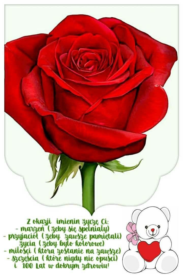 Z Okazji Imienin Imienin Flowers Plants Rose