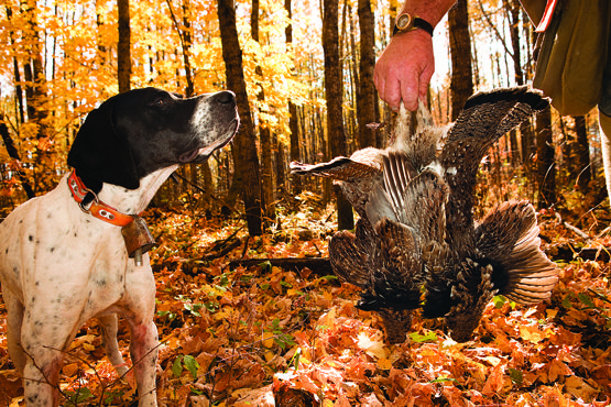 A Look at a Wisconsin Grouse Hunting Camp www.sportinglifeblog.com