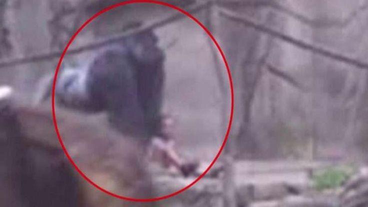 Cincinnati Zoo gorilla death: Conservationist Jeff Corwin says 'zoos aren't your babysitter' | Fox News