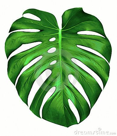 monstera leaf template - Google Search