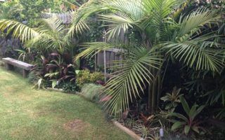 Gallery | Lawn mowing Cairns – Lawn Care Cairns