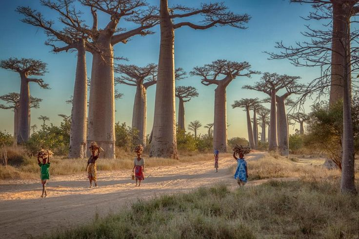 16 amazing things you probably didn't know about Madagascar  http://www.telegraph.co.uk/travel/destinations/africa/madagascar/articles/facts-about-madagascar/