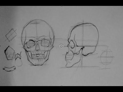 Drawing Human Anatomy & Head Proportions | How to Draw a Reaslistic Skull Step by Step