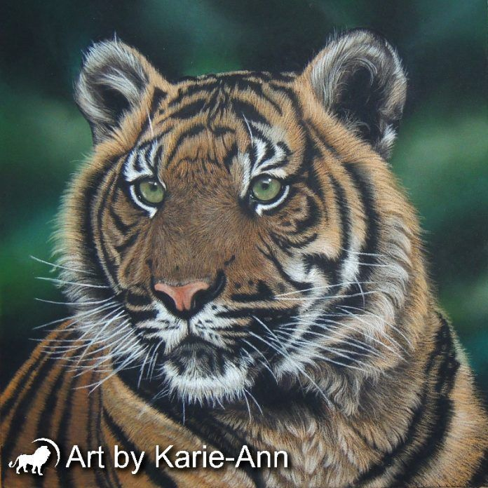 Join me for a tiger pastel painting workshop near Ross-on-Wye, Herefordshire, England.