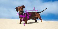 Еще одна выкройка комбинезона для собаки.   Рассмотрим, как сшить комбинезон для собаки, собачки или пёсика!