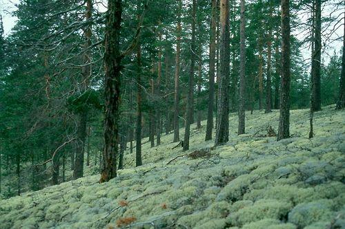 Rokua national park