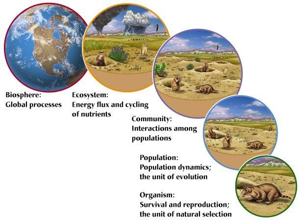 organism  population  community  ecosystem  biosphere