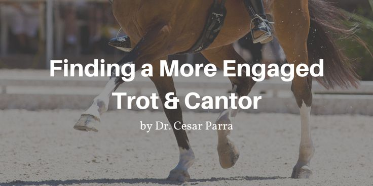 Finding a More Engaged Trot & Cantor by Dr. Cesar Parra #dressage