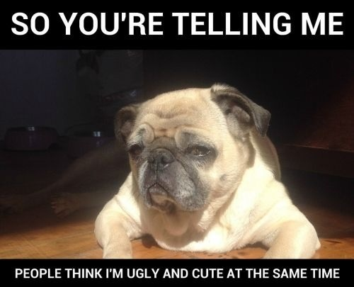 Dog Fat But Good Personality Meme
