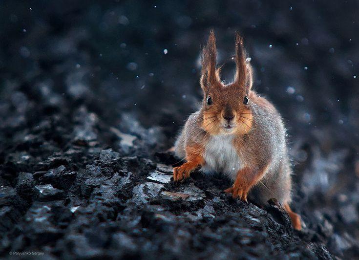Best Sergey Polyushko Photographe Ukrainien Images On Pinterest - Ukrainian photographer sergey polyushko shoots captivating animal portraits