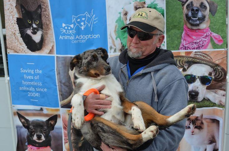 Home for the holidays pet adoption center animals