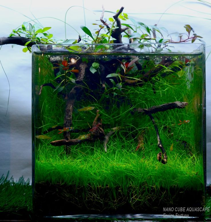 Cube Aquarium Aquascape 28 Images 17 Best About