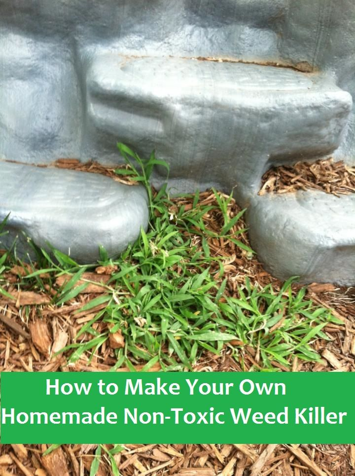 73 Best Images About Florida Gardening On Pinterest Gardening Vegetable Garden And Vegetable