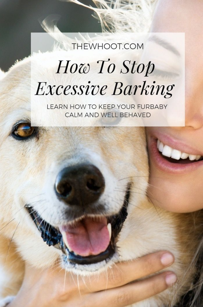 How To Stop Dog Barking Best Tips Easy Video Instructions Stop
