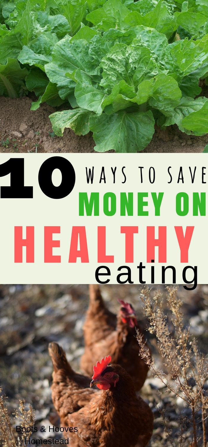 10 ways to save money on healthy eating! How to eat a healthy diet and stick to your budget!