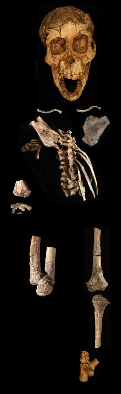 It's hard evidence that the type of spinal segmentation and numbering found in modern humans emerged 3.3 million years ago, the scientists say. The remarkable fossil was discovered in Ethiopia. She is from an early human relative species called Australopithecus afarensis.