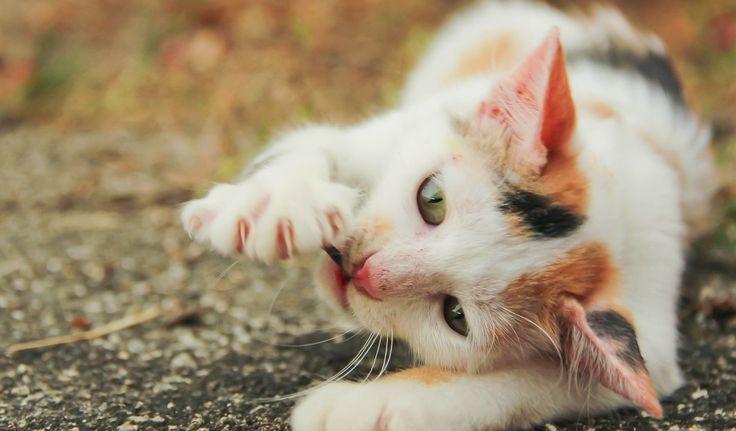 Kočičí škrábání: Dá se vůbec odnaučit?