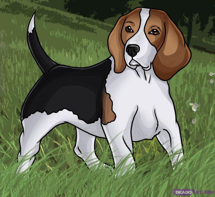 how to draw a beagle dog