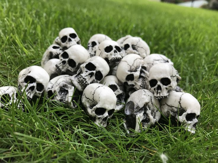 skulls on grass, skulls for road, image design