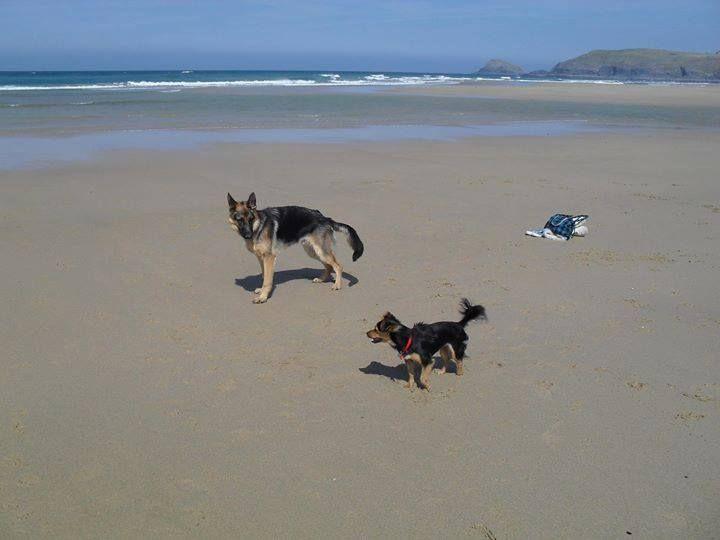 Charlie and Ruby. Owner: Karen Woodage (Facebook)