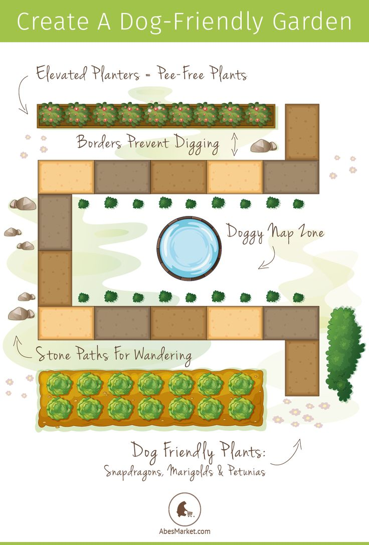 Ditch the Digging: Creating a Dog-friendly Garden