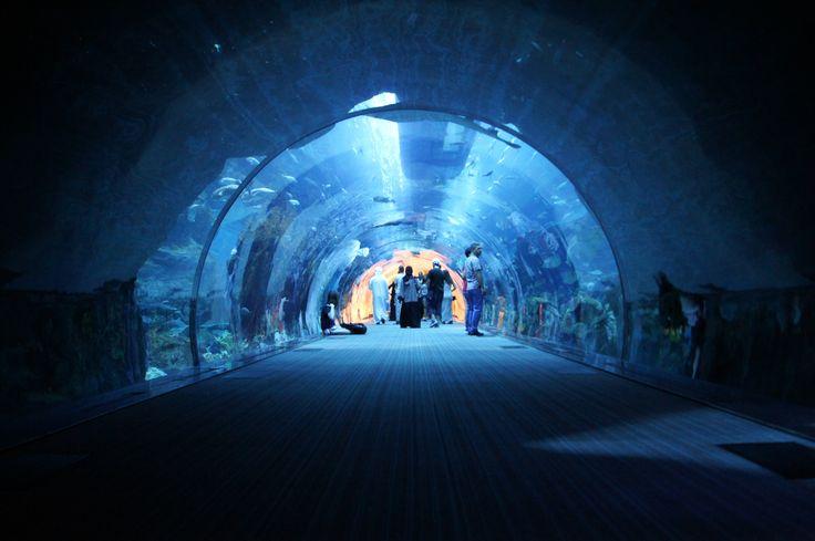 The Dubai Aquarium #dzendrus #dubai #emirates #dubaiaquarium #aquarium #travel #travelblog #travelblogger #traveler #traveling #podróże #water #blue