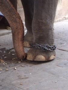 El Elefante Encadenado – Jorge Bucay ¿Creencias