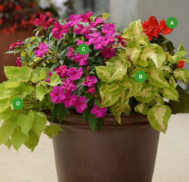 attractive fleurs en pot plein soleil #8: idée de jardinière pour