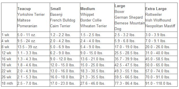 Things To Help Dogs With Separation Anxiety Pitbull Dog Weight
